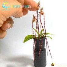 Орхидеи шт. 100 Мини карликовые деревья растения домашние миниатюрные цветочные горшки для садовых растений 2018 Редкие цветы подарок Бон