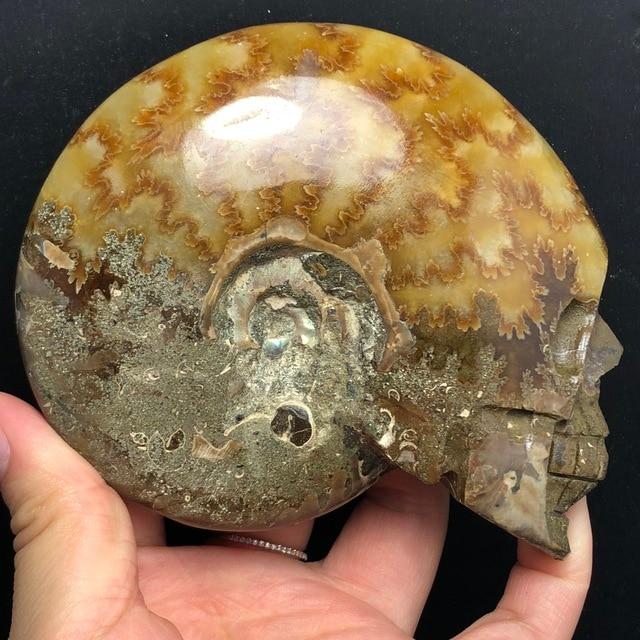 Fossiles descargot en pierre naturelle   Ornements feng shui en tranche de crâne sculptée, cadeaux de décoration pour la maison
