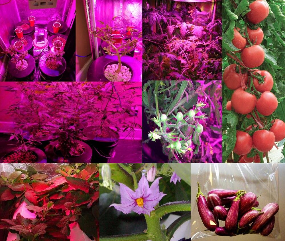 Reflector-Series 600W LED Grow Light Full Spectrum for Veg Bloom Indoor Plant