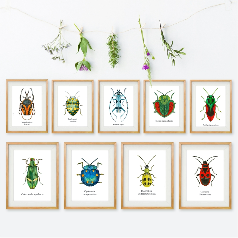 Watercolor Beetle Illustration Prints Coleoptera Insects Posters Home Room Wall Art Decor Educational Canvas Painting Picture