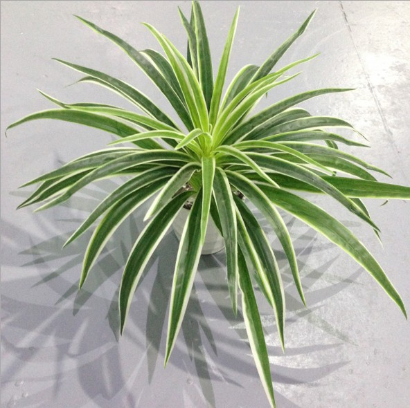 Artificial Plastic Plants Chlorophytum Branch Home Decorative Fake Plants Indoor Potted Table Decoration NO Pot
