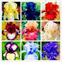 Buy  rennial Flower Seeds,plant for home garden  online