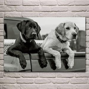 Animals labrador retriever dog