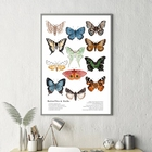 Butterflies And Moth...