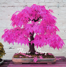 Japanese Bonsai Tree Seeds 8 Kinds 100 Pcs