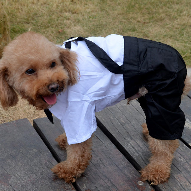 Online Shop Male Dog Wedding Suit Boy Dog Tuxedo Jumpsuit Clothes ...