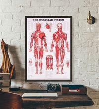 Анатомическая диаграмма Анатомия человеческого тела медицинский