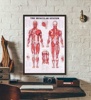 Anatomical Chart Human Body Anatomy Medical Wall Art Wall Decor Silk Prints Art Poster Paintings for Living Room No Frame