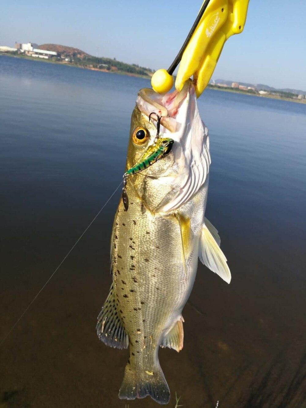 MZ55新渔获20180907-3