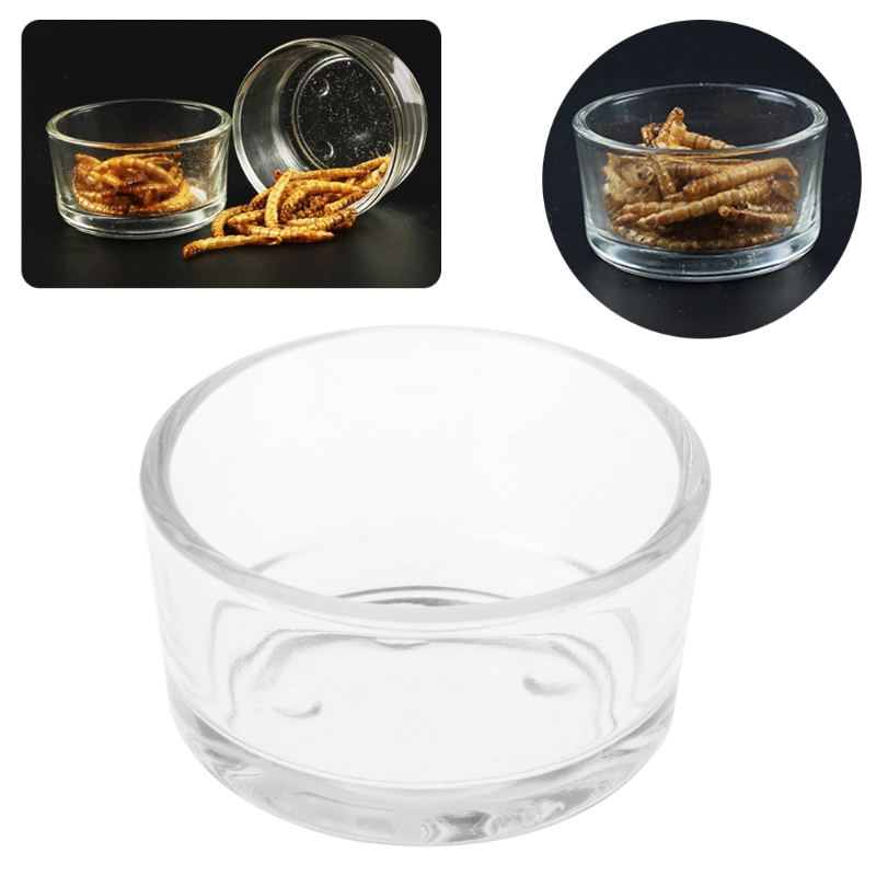 Pet Reptile Feeder Water Food Glass Bowl Cup Lizard Turtle Cricket Basin Feeding Feeding Supplies
