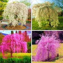 20 Pcs/Bag Fountain Weeping Cherry Tree, DIY Family Garden Shrub Tree Sakura Bonsai Plant, Ornamental Plant