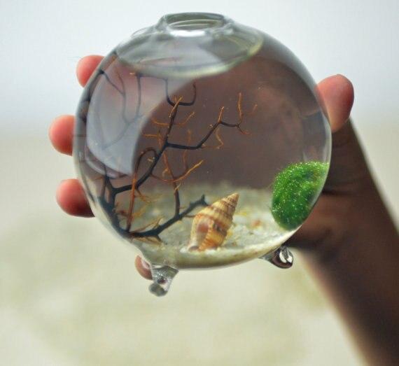Marimo Terrarium Kits With Aquatic Living Moss Ballfooted Glass