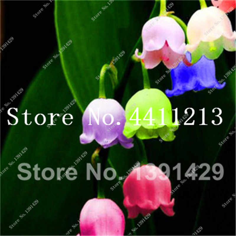 50 יחידות שושן של עמק פרח בונסאי מקורה נדיר בל סחלב פרח עשיר ארומה בונסאי פרחי צמח רב שנתי פרחים גן