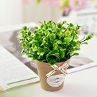 Artificial Flower Pl...