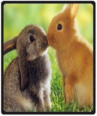 a pair of cute fluffy bunny rabbits design throw blanket fleece 50