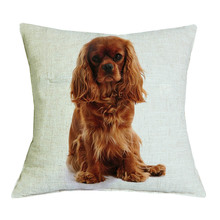 Cavalier King Charles Spaniel Cushion Cover Only43X43cm