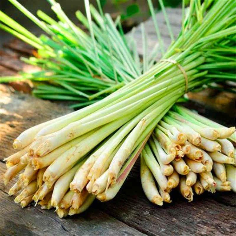 盆栽 100 ピースグリーン中国タマネギキッチン調味料新鮮なハーブ野菜鉢植え diy 家庭菜園