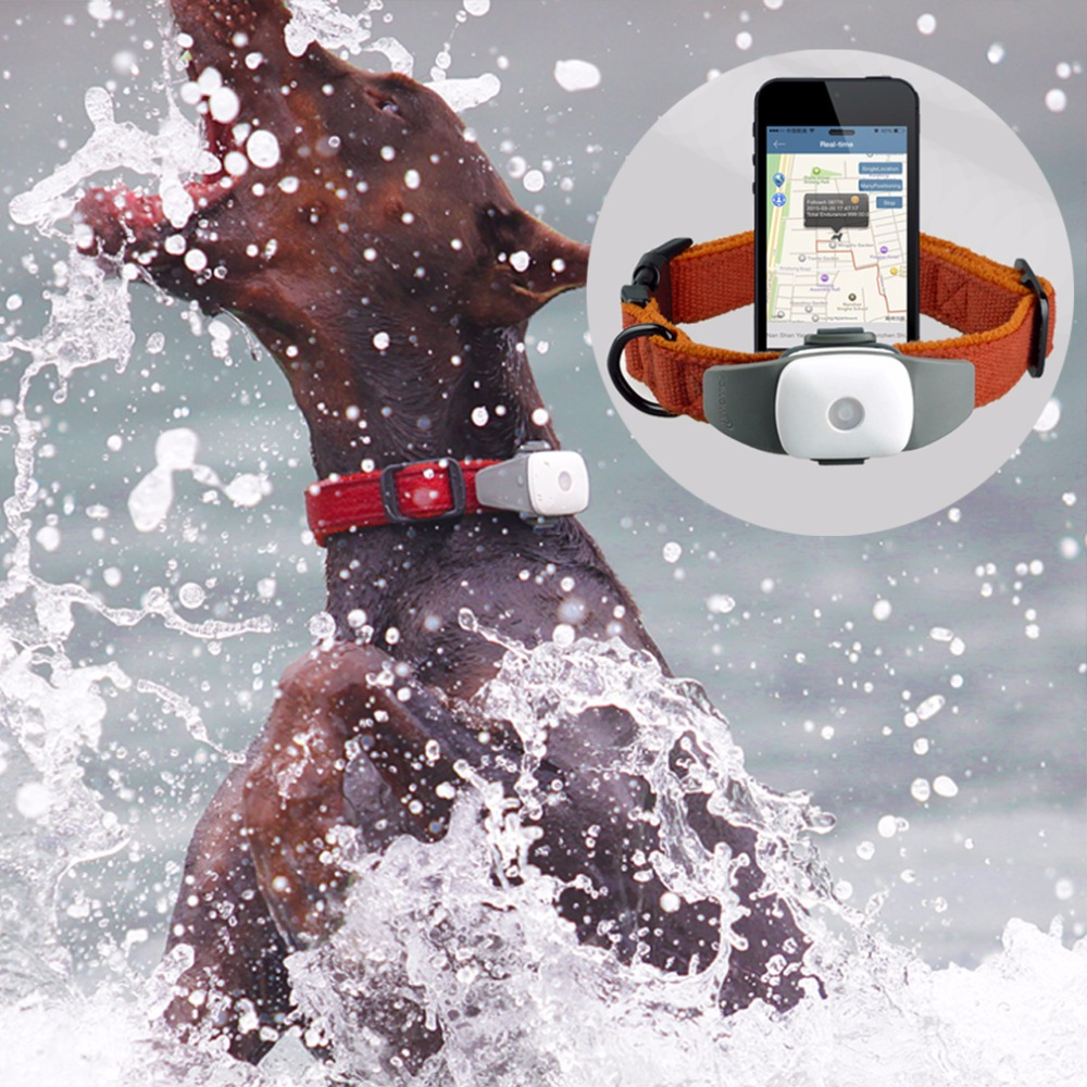Pet GPS, Pet GPS Tracker, Pet Activity Monitor, GPS Collar