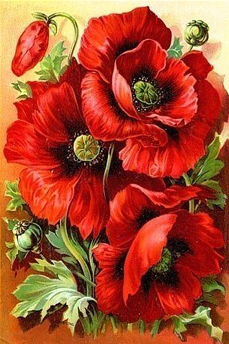 Pictures poppies flowers reviews online shopping - How to paint poppy flowers ...