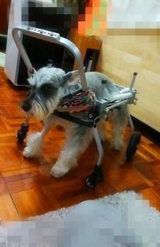 Dog font b wheelchair b font Pet walking font b wheelchair b font paralyzed dog cart