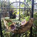 28 cm Hochzeit Dekoration Schmiedeeisen Blumentopf Cafe Shop Dekoration Sukkulenten Mond Form Hängenden Korb Lagerung Rack Dropship-in Blumenampeln aus Heim und Garten bei