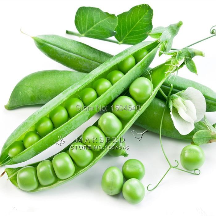 Comprar 10 semillas de hortalizas de for Plantas hortalizas ejemplos