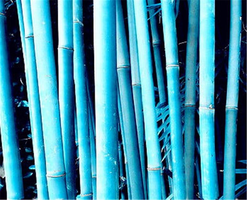 20 pcs garden blue bamboo tree perennial bonsai plant Garden Pots Planters Purifying Air,Balcony bonsai flores outdoor easy grow