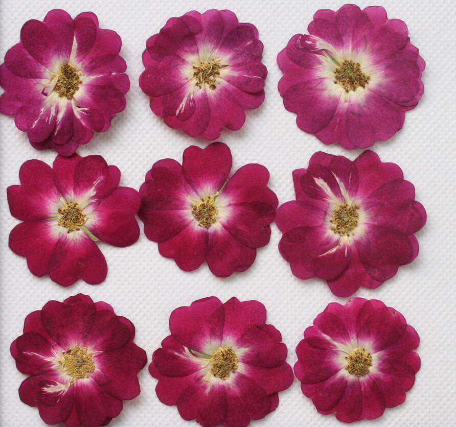 250pcs Pressed Press Dried Rose Dry Flower Plants For