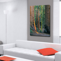 Modern Primeval Forest Picture HD Spray Print Pictures On The Wall Giclee Canvas Print Natural Landscape