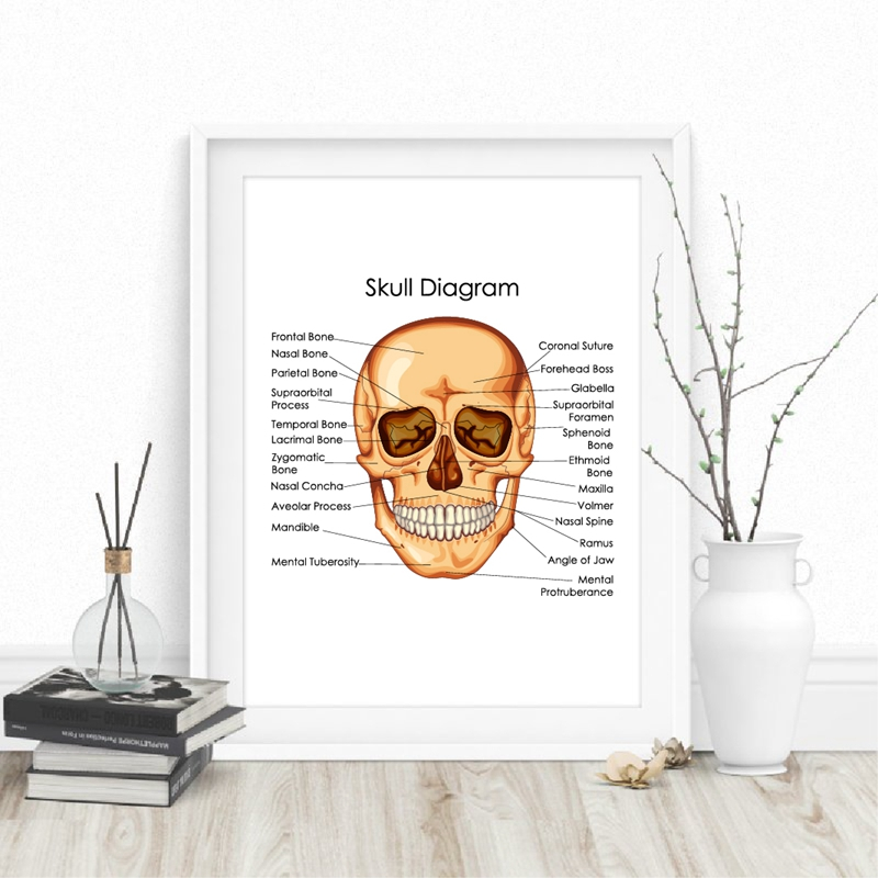 Human Anatomy Skull Diagram Poster Doctor Office Wall Art Decor Canvas Prints Medical Education Chart Of Biology Art Painting