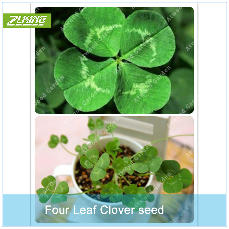 Garden Supplies Sincere Zlking 200pcs Lucky Four Leaf Clover Grass Bonsai Decoration Grow Your Own Luck Interest Countryside Diy Flower To Assure Years Of Trouble-Free Service Home & Garden