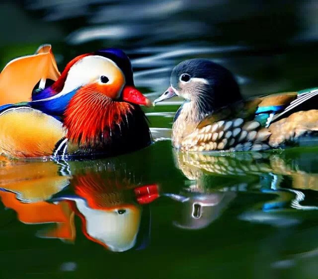Online Buy Wholesale Mandarin Duck From China Mandarin
