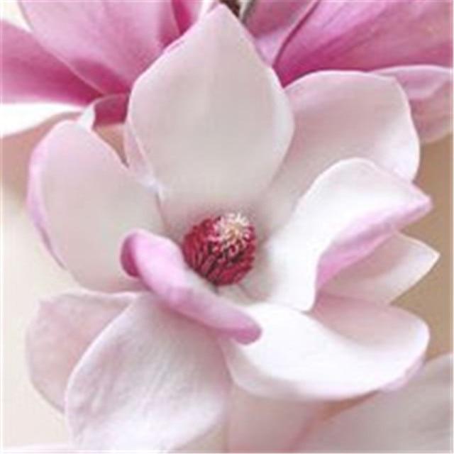 20 pz/borsa Perenne Magnolia Albero Pianta In Vaso Indoor & Outdoor Piante e Fiori Giardino di Famiglia Piantare In Vaso Della Decorazione FAI DA TE