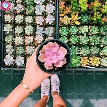 Buy  one bonsai,mini home&garden plant supplies  online