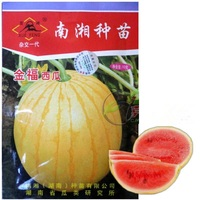 1 Original Packing, 10G, Jin Fu Water Melon seeds yellow watermelon seed precocious Gifts seeds, Thin rind (3mm)