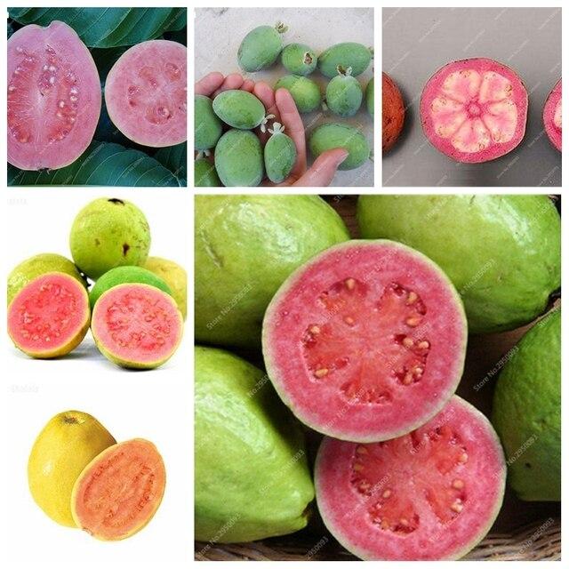 100 unids/bolsa de guayaba Bonsai deliciosa fruta Tropical maceta no transgénicos al aire libre las plantas de la fruta del árbol para jardín de casa de plantación