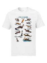 Otters of the World Top T-shirts Ocean Animal Funny Design Fashion Clothing Summer O Neck 100% Cotton T Shirt for Men White