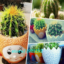 Free shipping 300pcs Prickly pear seeds Chile ball mixing Succulent Plant seeds(China)