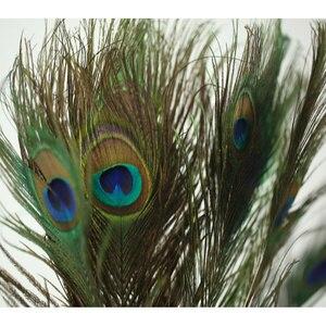 Image 5 - Hoge Kwaliteit Natuurlijke Pauwenveer 20 40 cm DIY Fotografie Props Decoratie Gevederte Ambachten voor fotostudio accessoires