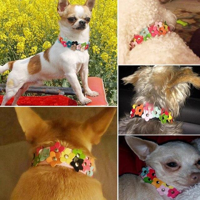 Hot Regolabile Pet Collare di Cane di Cuoio Per cani 5 di Colore Del Fiore di Sun Con Borchie gatto collari per cani pet shop dog acessorios