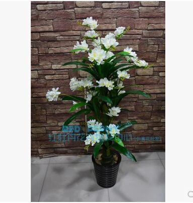 Die Simulation Baum Orchideen Gr 1 4 Nen Topf Blume Magnolia Bume