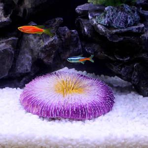 best top planted aquarium rock