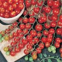 "200 tomato seeds Rare mini Climbing Tomato seeds, ""Cherry Tomatoes – sweet 200"", Mini Tomato Bonsai Plant seeds, Organic Food"