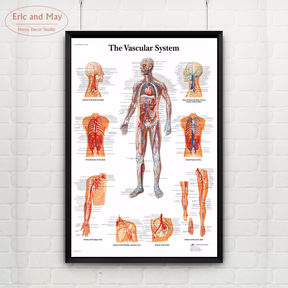 The Muscular Body System Canvas Art Print Painting Poster Wall