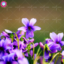 OFF!!50 pcs/bag Real Viola yedoensis seeds plant Vegetable and fruit seeds potted home&garden 95% germination rate bonsai flower