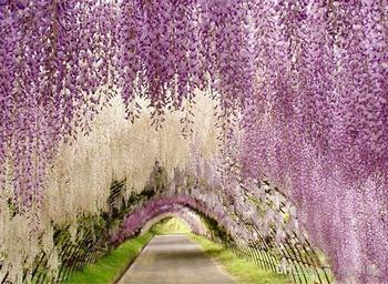 Upscale Artificial Silk Wisteria Flowers For DIY Wedding Arch Square Rattan Simulation Flowers Home Wall Hanging Decor