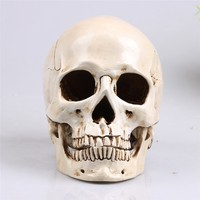 Skull Decor Mongolian Head Replica Model Realistic Lifesize 1 1 Resin Human Skull Home Decoration Arts
