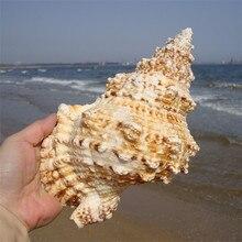 Von Einrichtungs Marine Meer Dekoration 20-25 cm Große Conch Natürlichen Ornamenten Shell Hochzeit/Festival/Party Dekoration großes Geschenk