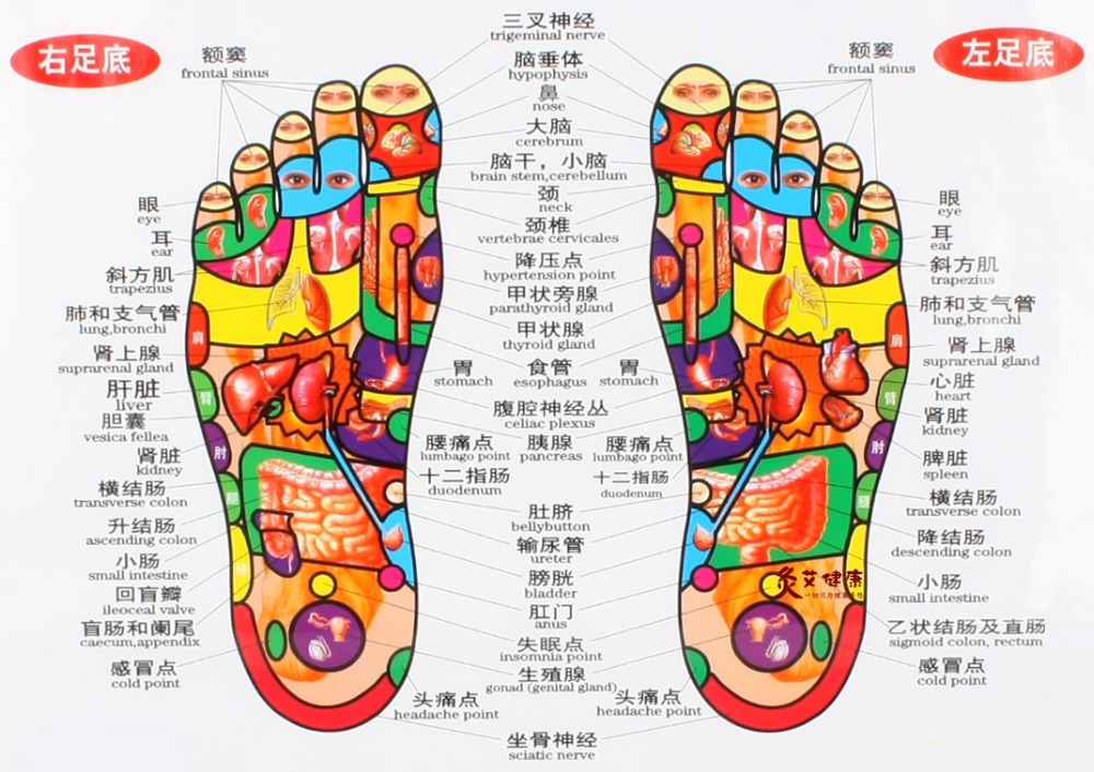 Chart of the foot reflective zone health therapy massage acupuncture acupoints medical study chinese english cm waterproof in  relaxation from also rh aliexpress