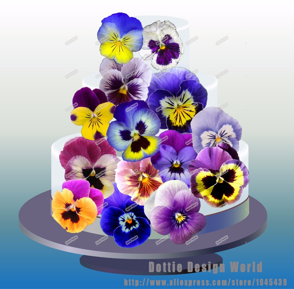 24 Blue Pansy Flower Edible Cake Topper Wafer Rice Paper Cake Decor